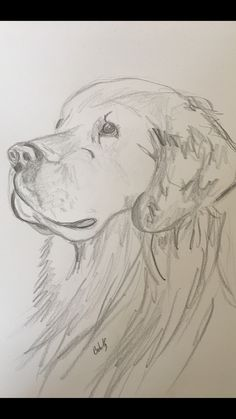 Hundezeichnungen - Drawing Tips easy dog drawing Cool Art Drawings, Pencil Art Drawings, Art Drawings Sketches, Disney Drawings, Easy Drawings, Art Sketches, Dog Drawings, Animal Sketches Easy, Sketches Of Dogs