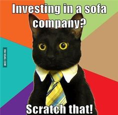 The best of the Business Cat meme. - Funny - Check out: Business Cat on Barnorama Business Cat Meme, Business School, Funny Videos, Memes Super Graciosos, Fish Puns, Right Meow, Funny Cat Memes, Hilarious Quotes, Cat Gif