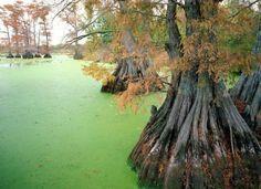Reelfoot Lake, near Tiptonville, Tennessee - Pixdaus