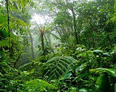 Costa Rica - Rainforest, waterfalls, wildlife and the beach.