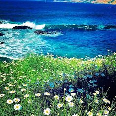 Love San Diego views ❤️🌼#sandiego #california #view #flowers #ocean #nature #travel #love #picoftheday #pictureoftheday #happy #perfect #beach #beautiful #nice #amazing #awesome #lajolla #wow #like #follow #cali #californiadreamin #happiness #iphone7 #shoot 😍❤️ #lajollalocals #sandiegoconnection #sdlocals - posted by Maja  https://www.instagram.com/majahpt. See more post on La Jolla at http://LaJollaLocals.com
