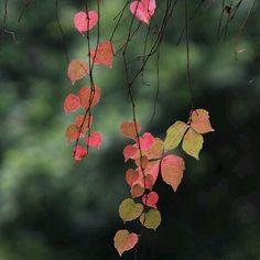 . Mas otoño, y mas hojas de colores rojos, verdes y amarillos. Mas oscuridad, humedad y serenidad. Mas letargo y silencio. Mas soledad y reflexión. Mas tiempo para uno mismo, mas frio para estar recogido y mas oscuridad para sentirse, escucharse y acompañarse.  Etapas que se han de vivir y disfrutar, tambien sobrevivir y sufrir. Crecimientos y evoluciones inevitables que nos acercan a nosotros mismos, a nuestro conocimiento y aceptación.  #adelapla . #hojastricolor #llargatardo #fall…