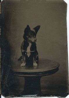 1/6 plate tintype of black dog (puppy?) sitting on round table. From bendale collection