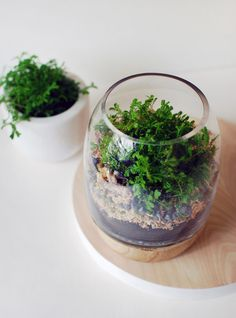 How to make a moss terrarium by re-purposing a timber and glass candle holder.