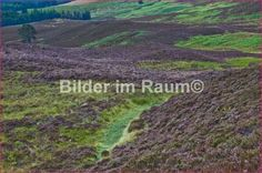 Schottland-Heidekomposition