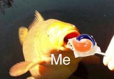 Yum yum tide pods New Memes, Dankest Memes, Funny Memes, Hilarious, Tide Pods, Dumb People, Forbidden Fruit, Cheer You Up, Me Too Meme