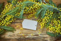 holiday background with blank paper tag branches of mimosa