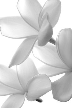 White Flower | Colour | Inspiration | Mood