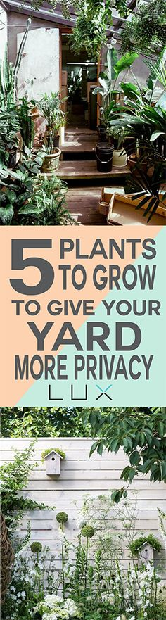 Plants to grow in your yard for more privacy.