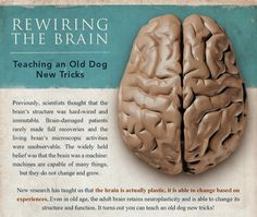 An infographic to explain the function of the brain and how you can manipulate it to your advantage.