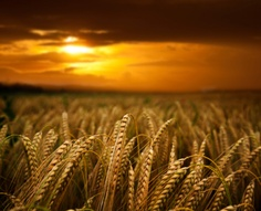 "Then He said to His disciples, ""The harvest truly is plentiful, but the laborers are few. Therefore pray the Lord of the harvest to send out laborers into His harvest.""  Matthew 9:37-38"