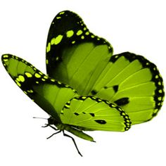 Green - Butterfly - Flutterby