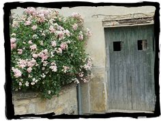 Roses and shed door at Vincent van Gogh's home in Auvers-sur-Oise, France
