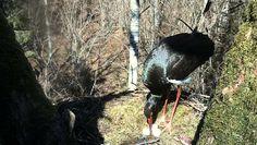 WEBCAM en directo de un nido de cigüeña negra | foroinfo