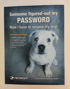 Now i Have to rename my dog #Password.  So true!