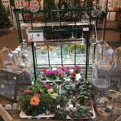 Fun with terrariums. New glass and great miniature plants! #terrarium #garden #penfieldNY