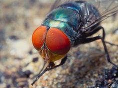 Macro photo of a fly's eye.