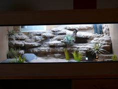 Desert landscape: my first rock background - CaptiveBred Reptile Forums, Reptile Classified, Forum