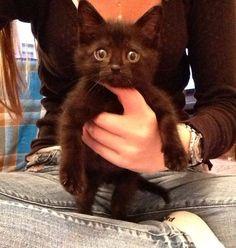 Black cat to cute