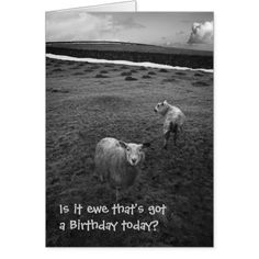 Birthday Cards for All - friends family and colleagues Inquisitive Sheep birthday card - click or tap any to see the slideshow