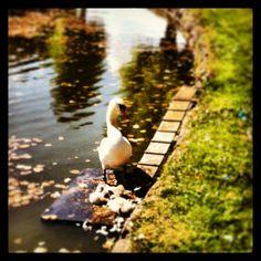 #frederiksborg on Instagram #frederiksborg #slotspark #sommerogsol #svanefamilien #kulturelferiemedsvigerfamilien