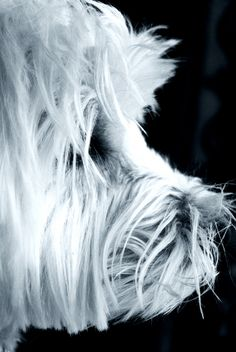 """Woof"" by Linda Hoey on Displate #dog #blackandwhite #photography #portrait #displate"