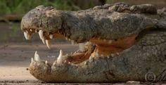 """""""O Grito do Bicho"""": A Caçada: série mostra o que o mundo animal tem de..."""