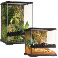 Care for Green Tree Frogs