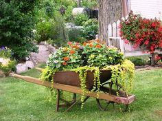 Nancy McKay's lush wheelbarrow includes creeping Jenny and puffy Zinnia