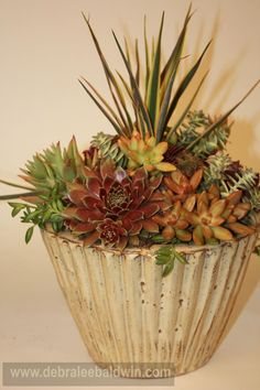 Complementary colors of succulents and pot