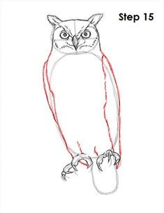 Great Horned Owl Drawing 15