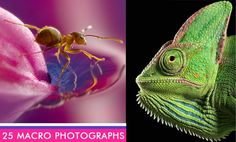 25 Most Beautiful Macro Photography examples and 10 Tips for Beginners by webneel