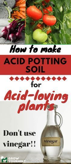 Why Is Learning How To Make Acidic Potting Soil For Acid-Loving Plants Vital For Every Gardener? Fall Vegetables, Organic Vegetables, Growing Vegetables, Veggies, Fruit Garden, Garden Pests, Garden Fertilizers, Herb Garden, Garden Art