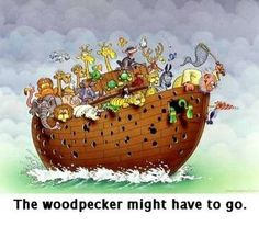Noah's Ark & the woodpecker