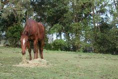 Sharkie Red - Standardbred Gelding