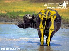 Grands gibiers africains - Le blog de Alex.bowhunter Africa Hunting, Impala, Elephant, Movie Posters, Art, Badger, Dog, Game, Africans