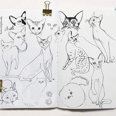 #cats #poissonbulles #tinoulejolysenoville esquisses#chat sketches#drawing