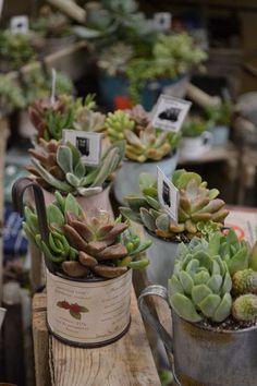 Suculentas | Kireei, cosas bellas