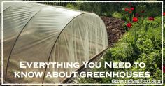 Everything You Need To Know About Greenhouses