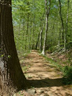 This old path, located in Savage Park, Howard County, Maryland, was once a railway.