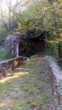 Uscita dal bosco sulla Francigena Toscana