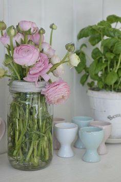 Ranunculus...my favorite!
