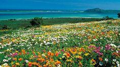Blühendes Südafrika - Frühling in der Kapregion - Wandern, Südafrika,