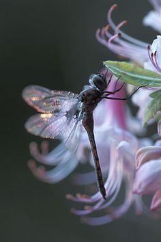 Great photo & composition of this lovely dragonfly