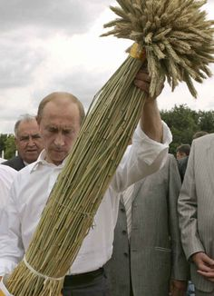 Putin looking at stalks of impressive wheat.