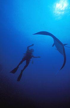 Maldives - manta love