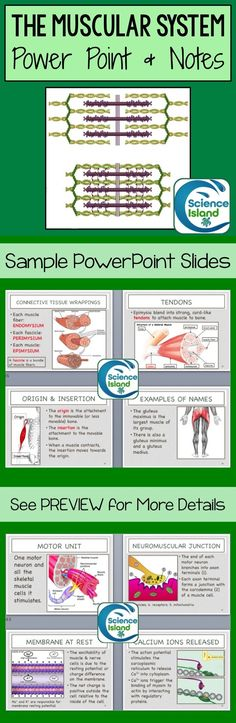 This editable Muscular System Power Point presentation, with over 75 slides, is designed for a high school or introductory college level anatomy and physiology course. Includes student and teacher notes. Science Curriculum, Science Classroom, Science Lessons, Science Education, Teaching Science, Life Science, Teaching Ideas, Classroom Ideas, Biology College