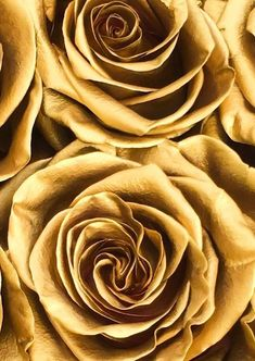 Simple is Best - Necklace – expectations vs. Gold Aesthetic, Aesthetic Colors, Tapete Gold, Image Deco, Gold Everything, Rose Family, Shades Of Gold, Gold Walls, Cocktail Movie