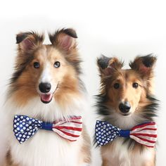 Happy 4th ...2 Collies for my mama. I think I might like to have a little Sheltie one day...