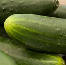 Cucumbers develop pits outside and wateriness inside when chilled below 50º for more than 3 days. Store them in a cool place on your kitchen counter, but be aware that they are sensitive to ethylene gas given off by some fruits and veggies, so keep them apart from the likes of tomatoes, melons, and bananas.